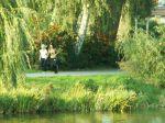 23. Herbst-Cross-Lauf um den  Schwanenteich Rostock - Bild 0053