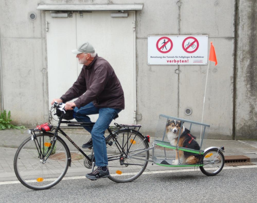 Radfahrer mit Hundeanhänger bei der 1. Tour de Rostock 2013